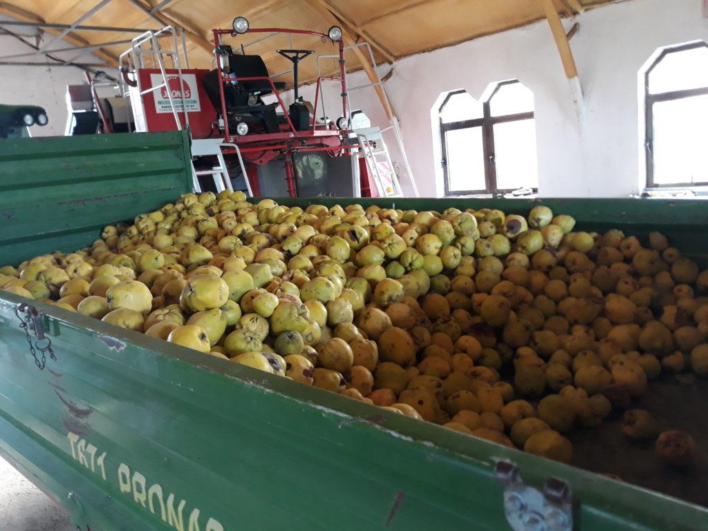 Fontos támogatások: két pályázat is elérhetővé válik a hazai élelmiszeripar szereplőinek - Fotó: Magro.hu, CSZS, Olaszliszka, birstermelő gazdaság