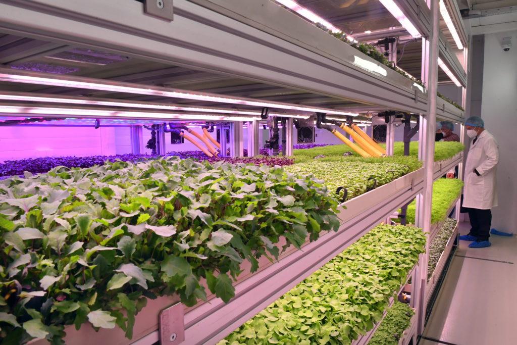 Budapest, 2021. május 5. Zöldségnövények fejlődnek mesterséges fényviszonyok között a Tungsram Group vertikális farmján az avatása napján a Tungsram budapesti központjában 2021. május 5-én. MTI/Máthé Zoltán
