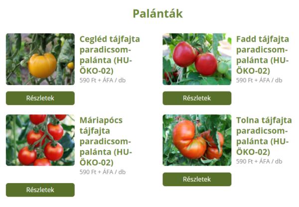 A 4 magyar tájfajta paradicsom árai