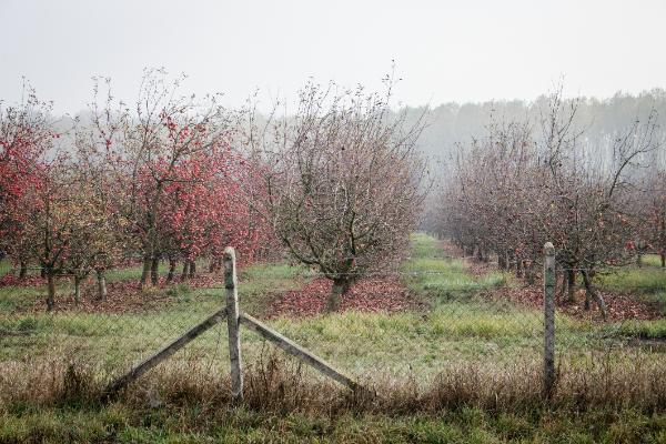 A támogatásokhoz kapcsolódó vis maior események miatt néhány esetben kérhetnek enyhébb elbírálást a gazdálkodók - Fotó: Adam's Photovision, Vásárosnamény