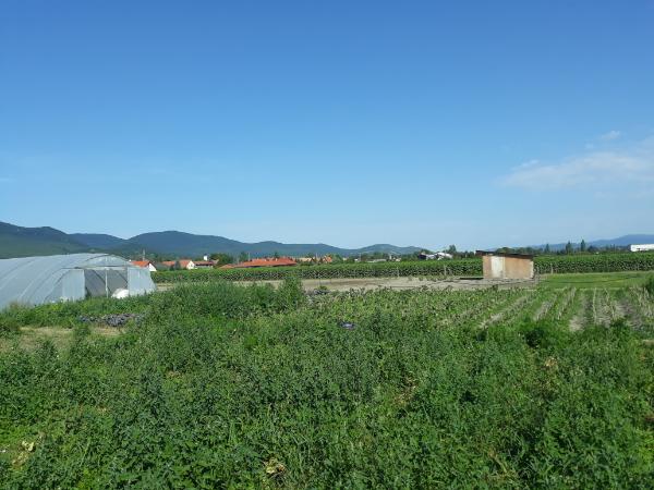 A biotermékek választásával több kedvező hatást érhetnek el a fogyasztók - Fotó: Magro.hu, CSZS, Tahitótfalu, Háromkaptár Kertműhely
