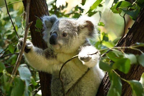 A kakukkfüvet, az eukaliptuszt, a fahéjat vagy a borsos mentát tartalmazó szájvíz hasznos a vírus elleni védekezésben