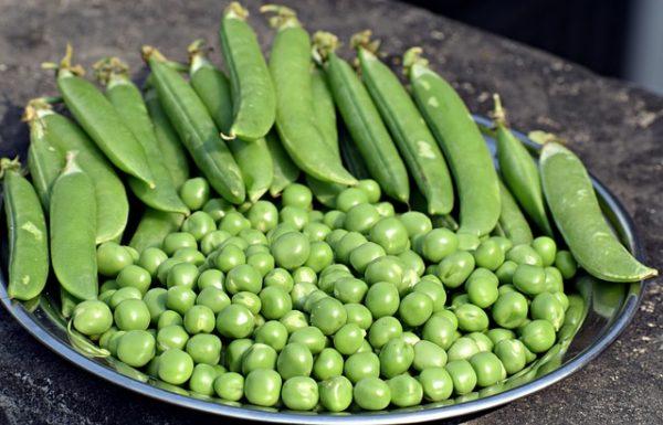 A cukortartalmuk lassabban alakul át keményítővé, azonban a termés szedésével  ne várjunk sokáig