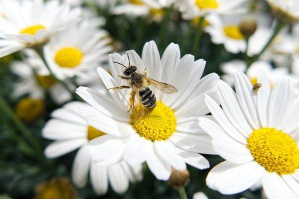 Ahol a méheknek és egyéb beporzóknak táplálékot adó növények nőnek, amelyek nektárt, virágport vagy más, nekik szükséges anyagokat szolgáltatnak