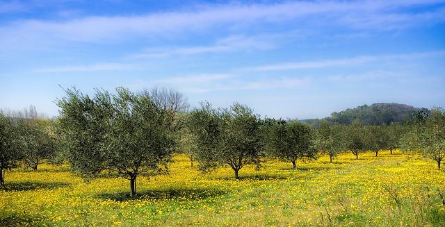 """Az ültetvénytelepítési támogatás feltétele a Gyümölcs Termőhelyi Kataszterben a legalább """"termesztésre alkalmas"""" minősítést kapott terület"""
