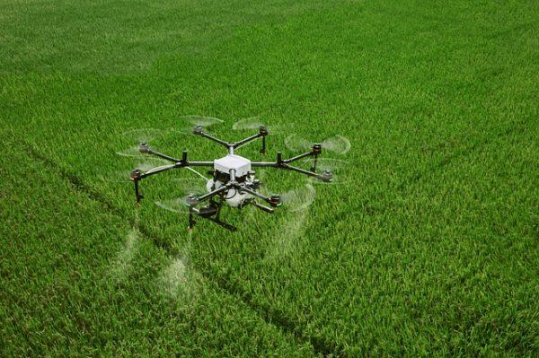 A bokrosi kft. drónja egy felszállásból 20 liter szert tud optimális esetben kijuttatni, ezzel hozzávetőleg egy hektárt kezelhetnek