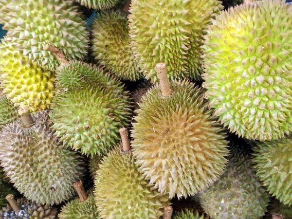 Miután teljesen megérett, rothadó bűzt áraszt. Egy jól megtermett durián 30 cm hosszúságú és 15 cm átmérőjű is lehet. Súlya általában 1-6 kg között változik