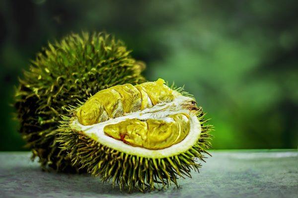 Láz ellen igen régóta bevetik, de sárgaság esetén is sok országban duriánból készült főzetet alkalmaznak. Egyes helyeken afrodiziákumként tekintenek rá