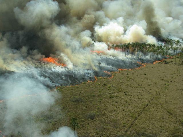 A magyar erdőtüzek elleni védelem két kiemelten kockázatos időszakban a leginkább szükséges