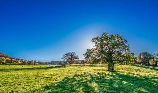 Ha igazán zöld fűre vágyunk, akkor rendszeresen szellőztetni kell a gyepet