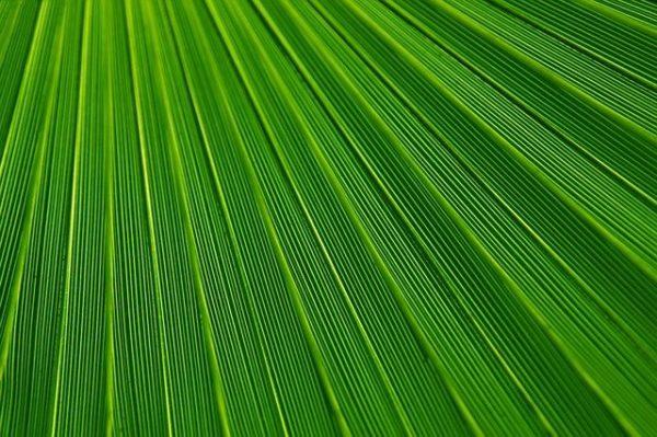 A rövid tenyészidejű káposztaféléket általában április közepétől augusztusig  ültethetjük