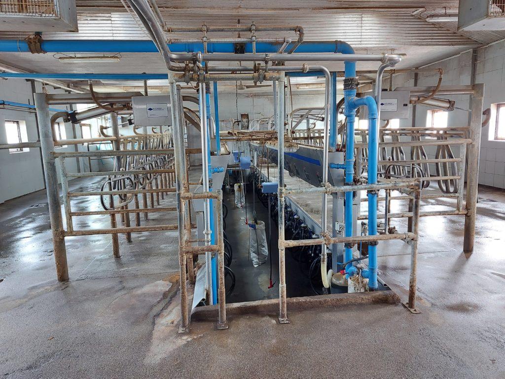 Egy brit üzletember szerint a jelenlegi tejipar 10 év múlva eltűnik - Fotó: Magro.hu, CSZS, Érsekvadkert