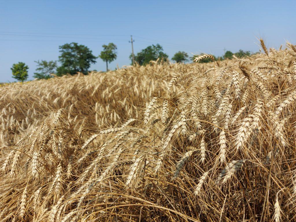 Látványos és jelentős az ökológiai gazdálkodás területének növekedése Magyarországon - Fotó: Magro.hu, CSZS, Baracska