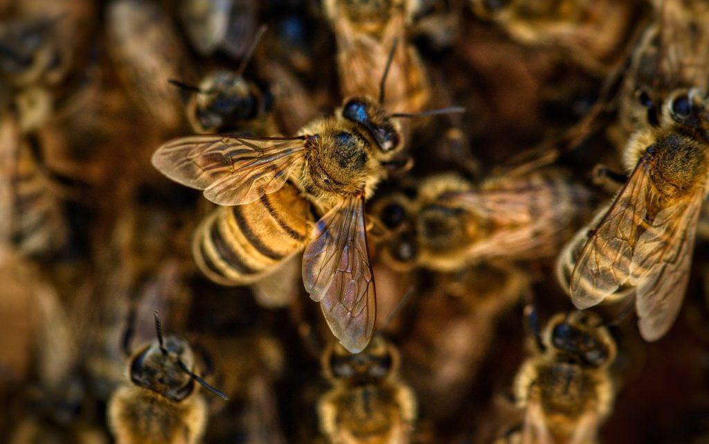 Egyszerre kell biztosítani a méhek magas szintű védelmét, és hogy a biztonságosan használható növényvédő szerek a termelők rendelkezésére álljanak