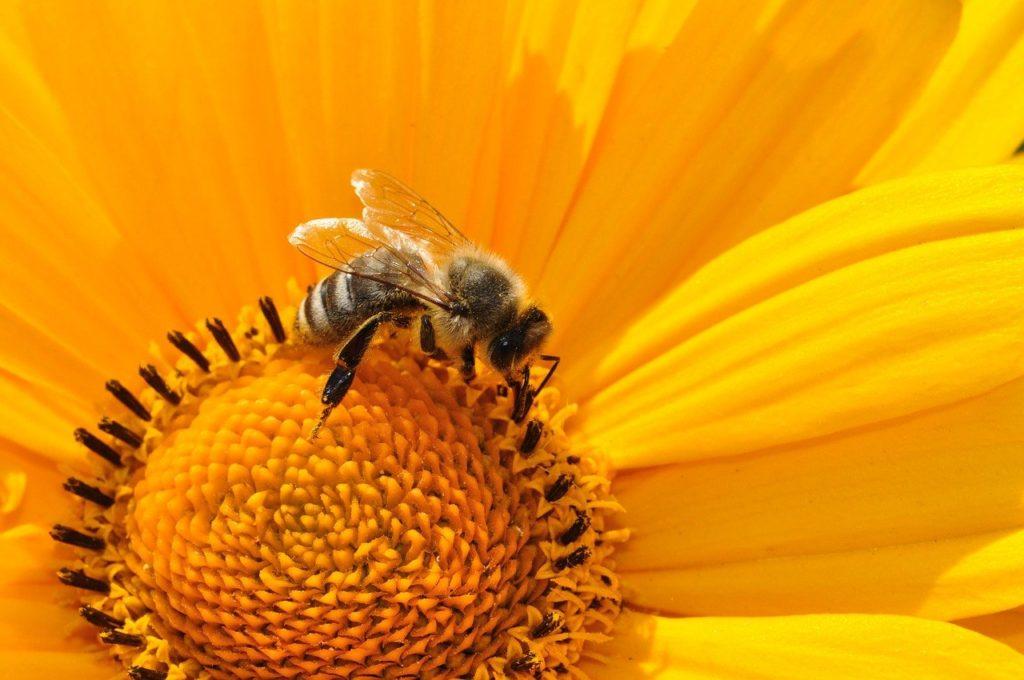 Élelmiszereink mintegy 70%-a igényli a beporzó állatok közreműködését