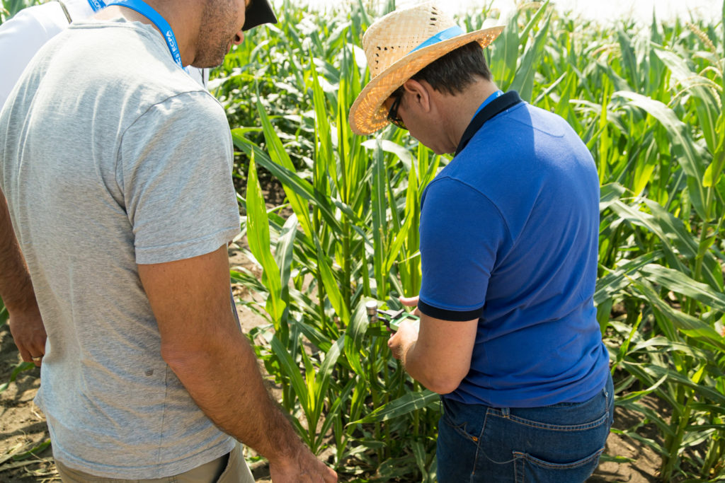 A kukorica precíziós termesztése során több dologra is érdemes odafigyelni - Fotó: Magyarországi Precíziós Gazdálkodási Egyesület, 2021