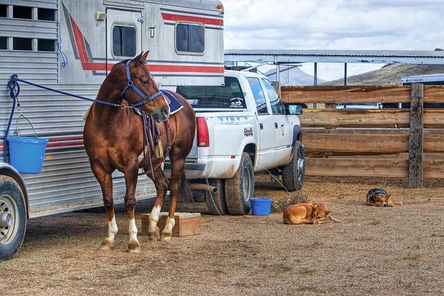 Szigorúbbak az állatszállítás feltételei a hőségben
