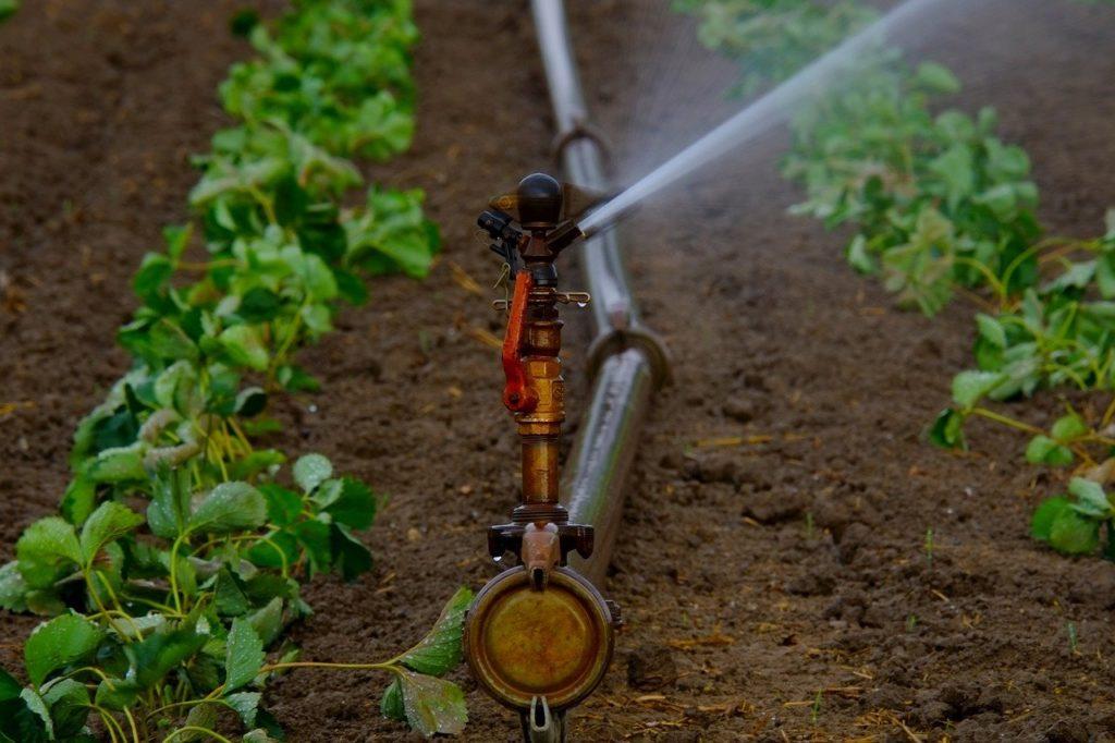 A szórófejek állítható magasságúak, így a talajközeli, növényközeli vízkijuttatással akár 10-15 százalékkal is csökkenthető a párolgási veszteség