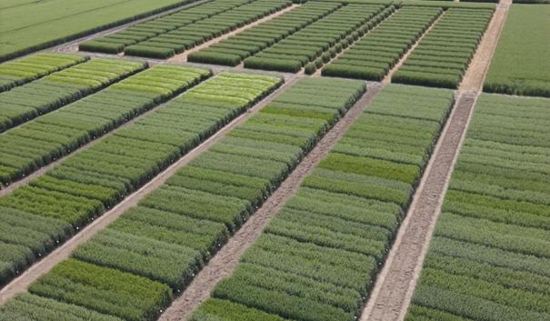 Komplex kisparcellás agrotechnikai kísérletek