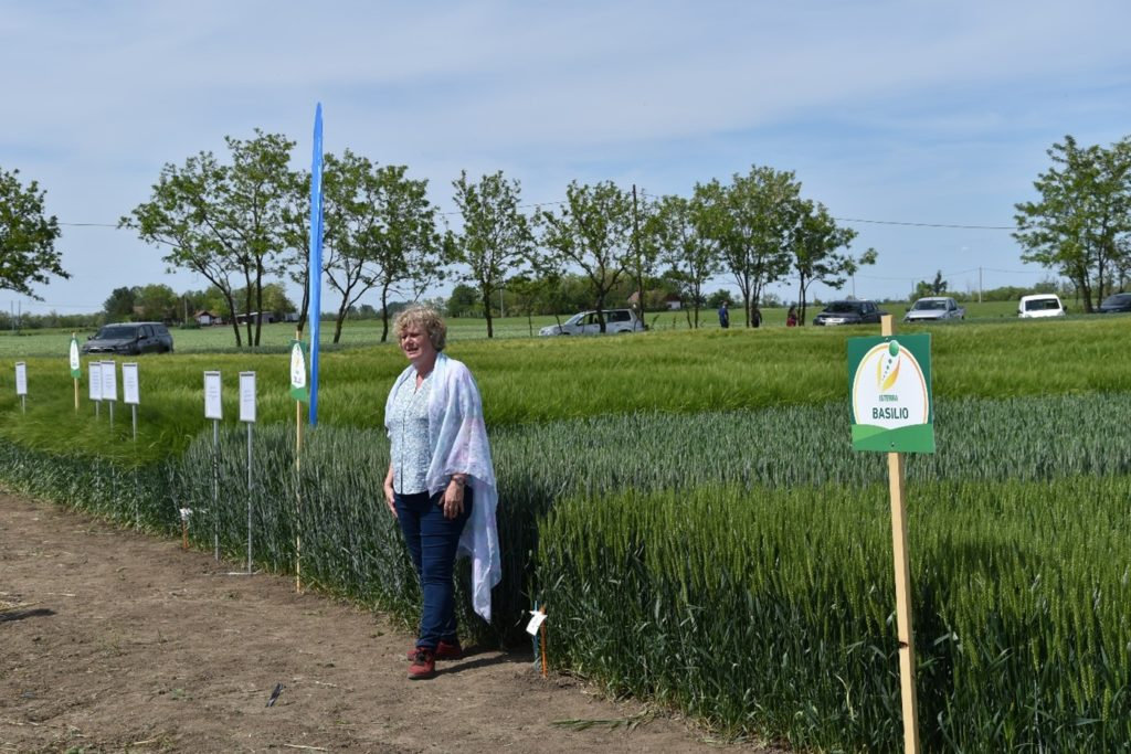 Az Isterra Magyarország Kft. kereskedelmi vezetője, Virágné Pintér Gabriella Békéscsabán, a fajta- és agrotechnikai kísérletek bemutatóján