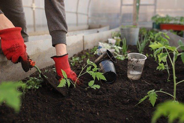 A zöldségpalánta előállító és forgalmazó engedélyes üzem megfelelő működésének feltételeit foglalta össze a Nébih