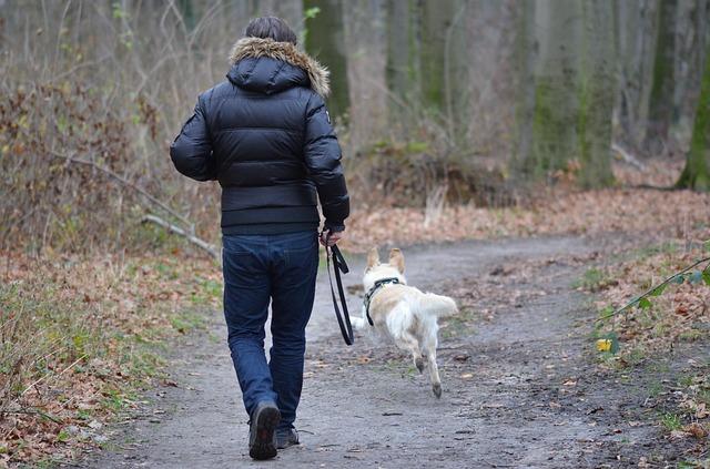 Hyalomma kullancsot találtak a Kullancsfigyelő projekt segítségével egy Vas megyei kutyában - képünk illusztráció