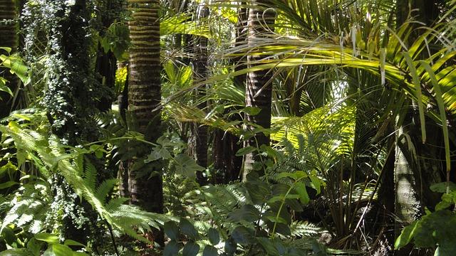 A Földön élő fák harmadát a kihalás veszélyezteti