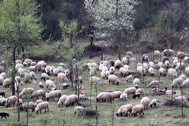 A súlyos romániai vonatbaleset áldozata 17 birka, egy kecske és a juhász - képünk illusztráció