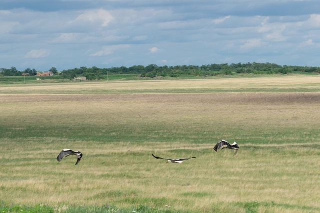 Magyar kutatók vizsgálata segít a termikek használatának jobb megértésében, többek között a gólyák viselkedését is tanulmányozták