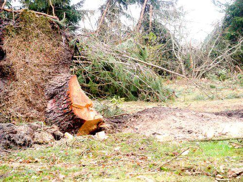 Eladó Serrat FX 6 fix és lengőkalapácsos erdészeti zúzó 1 db fotó