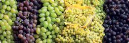 Eladó szőlő