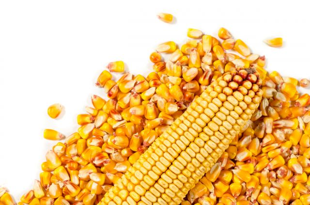 Eladó kukorica 100 t fotó