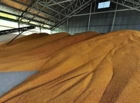 Eladó kukorica 4 000 t fotó